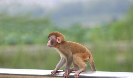 A cute little monkey, in the park Stockfoto - 131295402