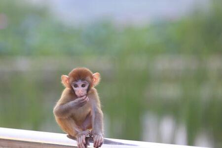 A cute little monkey, in the park