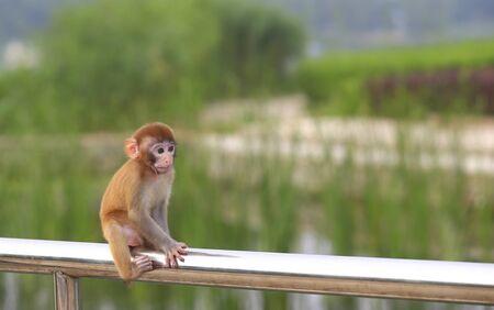 A cute little monkey, in the park Stockfoto - 131295551