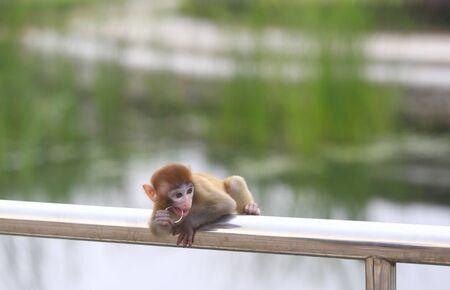 A cute little monkey, in the park Stockfoto - 131295552