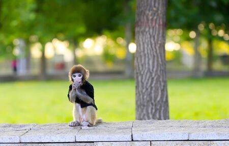 A cute little monkey, in the park Stockfoto - 131295549