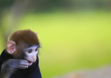 A cute little monkey, in the park Stockfoto - 131295555