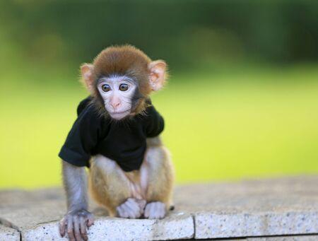 A cute little monkey, in the park Stockfoto - 131295557