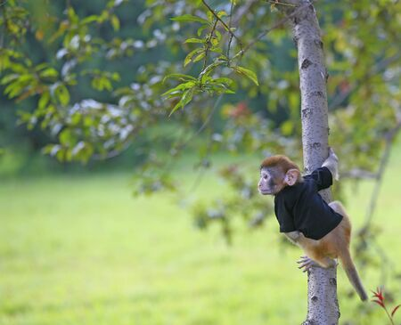 A cute little monkey, in the park Stockfoto - 131283048