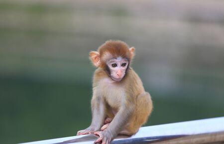 A cute little monkey, in the park Stockfoto - 131295564