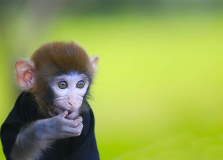 A cute little monkey, in the park Stockfoto - 131294900