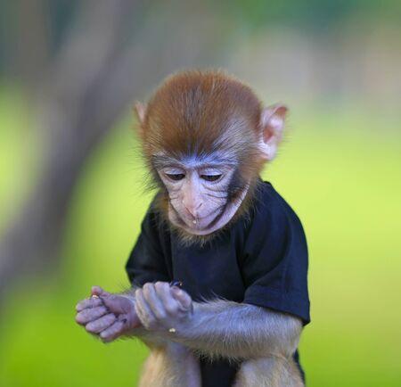 A cute little monkey, in the park Stockfoto - 131294901
