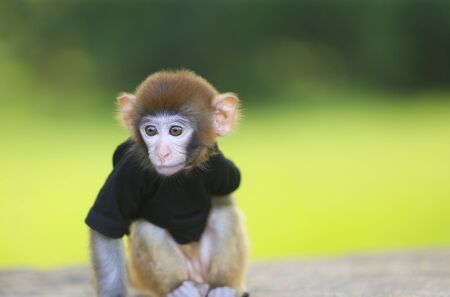 A cute little monkey, in the park Stockfoto - 131294904