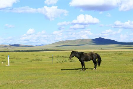 Many horses are grazing on the grassland Stockfoto