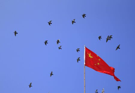 Many pigeons fly around the fivestar red flag