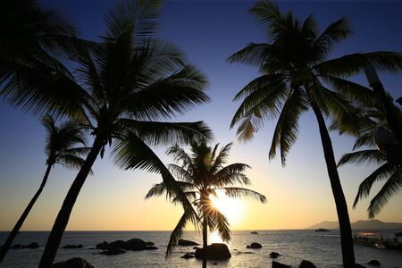 Coconut trees against a blue sky