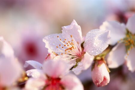 Blooming peach blossoms in the park Banco de Imagens