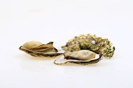 The oyster isolated on a white background