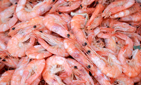cooked prawns close up