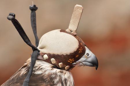 falconry: Hawk with Falconry hood, Mongolia