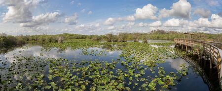Everglades national park anhinga trail landscape, Florida