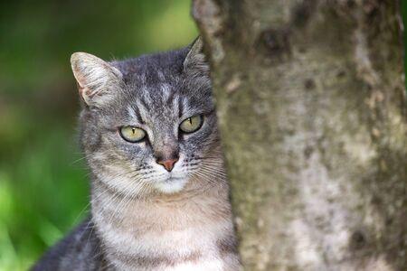 Cat portrait looking at camera behind a three