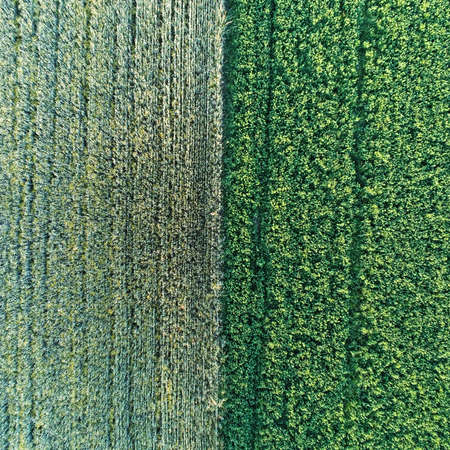 Aerial views of the boundary between a corn field and a grass field