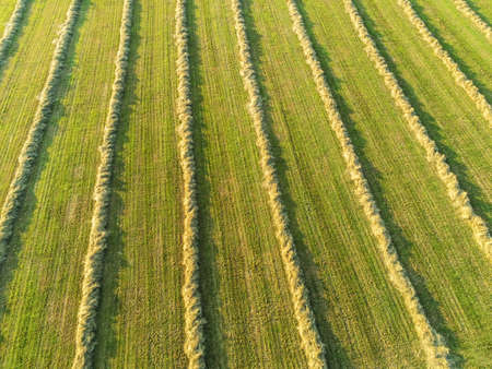Aerial view of freshly cropped field, Po valley, Italy