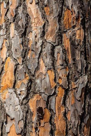 Tree bark detail close up