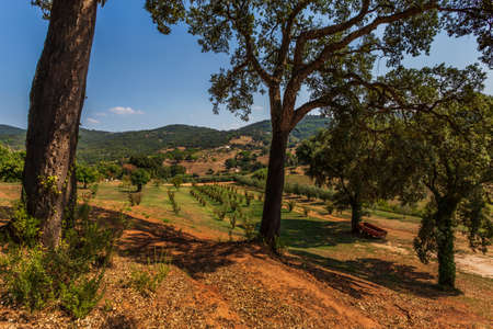 Tuscany hills landscape with olive trees and threes