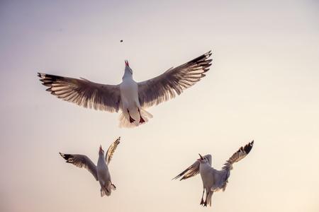 concurrencer: Seagull concurrence pour la nourriture.
