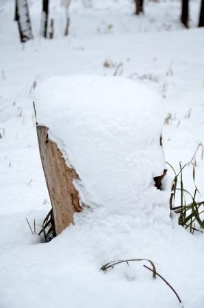 Snow lies on a hemp Stock Photo