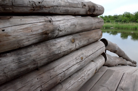 Logs of the old forest