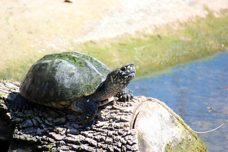 Smiling Turtle on Log Photograph Stock Photo