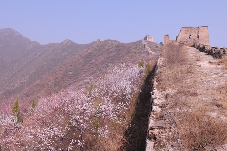 Peach blossom full of incense the Great Wall Stock Photo - 13045661