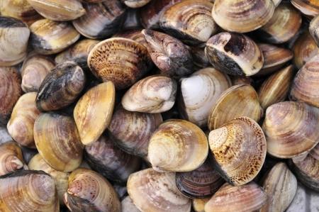 Schaaldieren zeevruchten wordt verwezen naar de Marine biologische schelpdieren, kan voor menselijke consumptie en de smaak heerlijke schelpdieren De schijf van weekdieren deur kieuwen omtrek of dubbele schelp klassen voor het algemeen met in vitro is 1 2 stuk van schelpen, de naam C Stockfoto