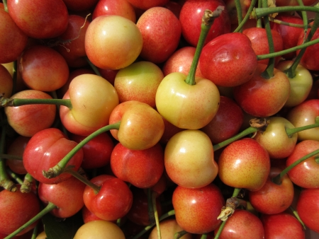 activ: Large cherry in the north is deciduous fruit tree trunk China cherry fruit mature after the first fruit tree species. Traditional Chinese medicine (TCM) think, big cherry pick has attune of tonifying qi qufeng wet function. Agricultural experts say: activ Stock Photo