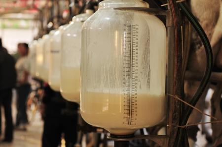 Milking equipment  photo