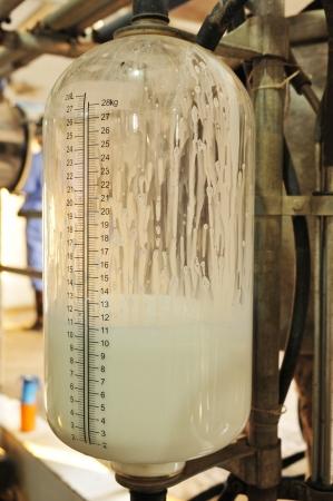 Mechanized milking equipment milking parlour  photo