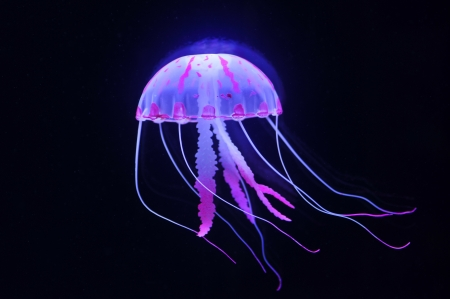 jellyfish  Stockfoto