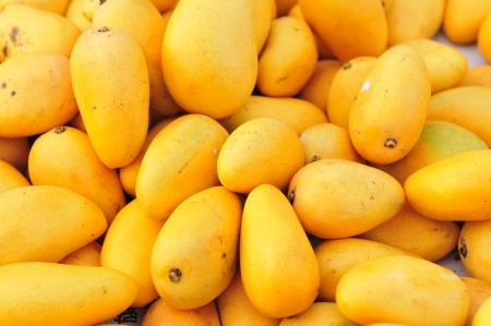 mango fruta: Una especie de origen de la India