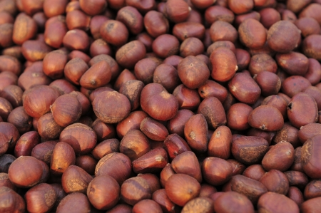 fagaceae: Chinese chestnut  scientific name  Castanea mollissima , another name, Chinese chestnut chestnuts, is fagaceae plant of chestnut, originating in China, distributed in Vietnam, Taiwan and mainland China, growing within 370-2800 meters of areas, see more at