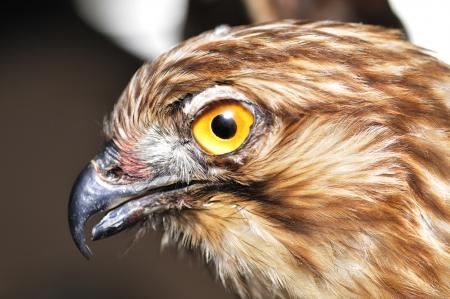Eagle head feature