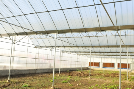 Building good modern vegetable shed Stock Photo - 17362824
