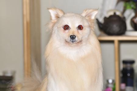 carding: White dog
