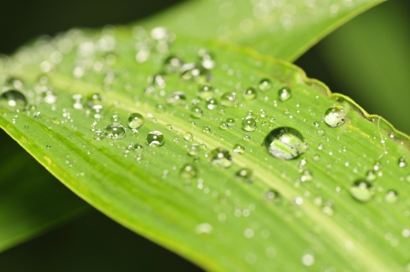 The water drops on green leaves   Stock Photo