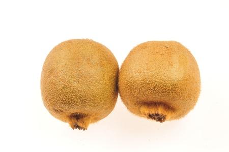 no integrity: Mudskipper peach on a white background