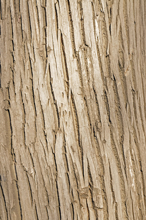 The texture of the bark