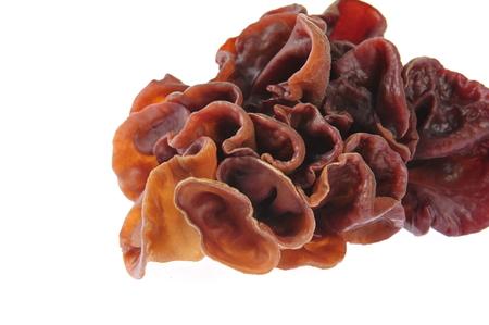 cloud ear fungus: Black fungus on a white background Stock Photo