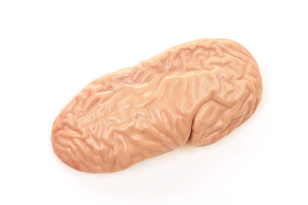 Pigs Kidney Stock Photos Royalty Free Pigs Kidney Images