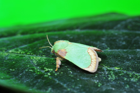 arthropods: Moth insects