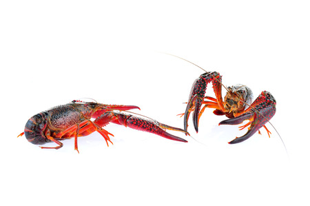 Lobster on a white background Stockfoto