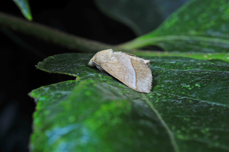 sphingidae: Moth insects