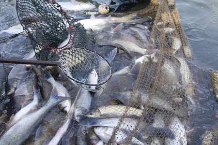 fishing nets: The fish in the water fishing nets Stock Photo