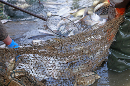 The fish in the water fishing nets Stock Photo